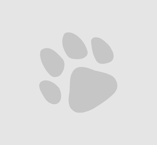獣医師の先生のオススメ